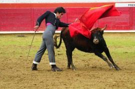 J. Manuel Sandín tentó en la plaza de Estella 13 machos de Alba Reta