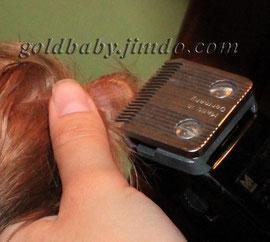 как постричь ухо йорку