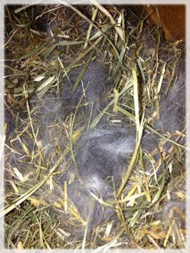 Das Nest am 5. April 2013