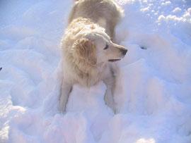 Schnee, es gibt nichts schöneres