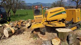 Wurzelstöcke ausfräsen, Henzelmann Baumpflege Baumschnitt Fällung Spezialfällung Stockfräse Strunkfräse Pflanzung Arbeiten Spiez Bern Oberland Wallis Kanton Baum Bäume