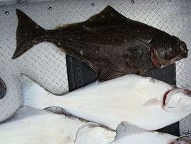 Ilikes2Fish