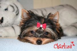 http://yorkita-charlize.blogspot.com/