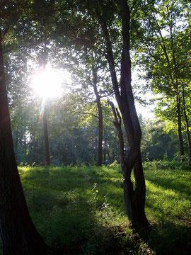 Frühlingssonne im Herbstwald