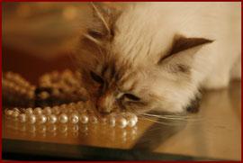 L'entretien des perles