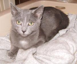 Saphir (3 mois)