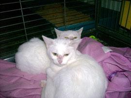 Blanche et Neige rebaptisées Falla et Feze (6 mois)