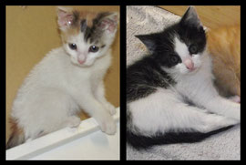 2 chatons - FA Julie