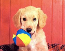5 idées reçues sur les chiens, photo Snuzzy