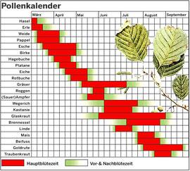 Pollenkalender mit den wichtigsten Pflanzen