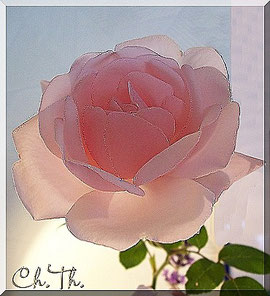 Rose, Blumen, Christel Thoenes