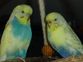 Flippi und Uschi