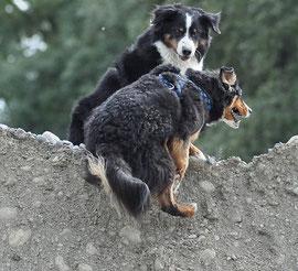 Dogs on the rocks, or a fun walk
