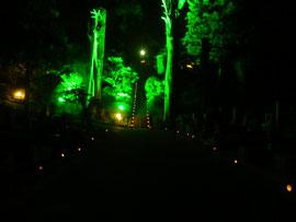 ライトアップされた参道の大杉と並べられた灯篭の明かり