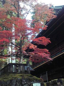 輪王寺の紅葉きれいでした