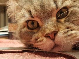 Katzen, Hunde und Pferde sind sehr sensible Tiere die am besten bei sich zuhause behandelt werden.