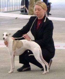 Gracieuse à participé à l'exposition canine de beauté à Bordeaux et à terminé 4 eme excellent de sa classe !