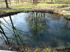 ●園内にある丸池。木々の反射がきれいでした。近くには、ゲンジボタルの生息する場所もあります
