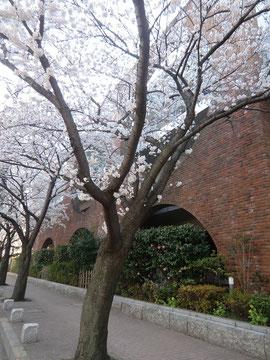 ●武蔵野中央公園から煉瓦づくりの小学校の横を通り千川上水緑道(五日市街道)に出ます