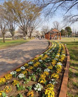 ●公園には、手入れの行き届いた花がきれいに植えられていました