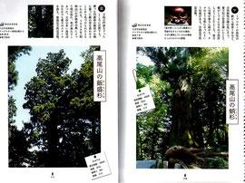 高尾山のパワーツリーをご紹介