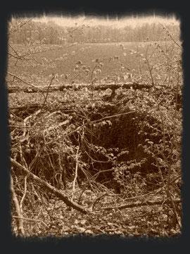Blick aus der Stellung in Richtung Caureswald