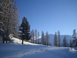 Winterstimmung bei Samedan