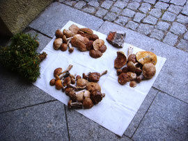 Pilze Ostpreußen Ostpreußenreise individuell