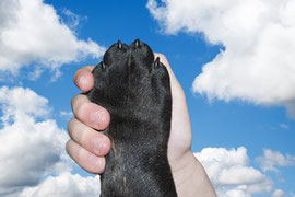Patte d'un chien noir dans la main d'un humain langage corporelle du chien par coach canin 16 éducateur canin charente
