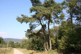 Na szlaku na św. Górę Jawor / Fot. Dorota Wolanin