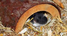 Schöner Wohnen für Hamster