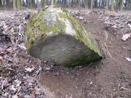 Bei Forstarbeiten beschädigt