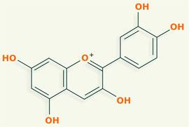 Cianidina - flavonoides