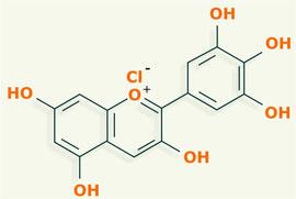 Delfinidina - flavonoides