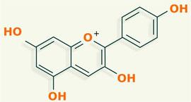 Pelargonidina - flavonoides