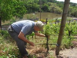 ブドウ栽培について熱心に説明して下さるRonさん