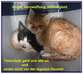 Ich trauer mit den Katzen, die so sehr auf die Zuflucht gehofft haben und nun auf der Straße bleiben müssen. Wie es für sie enden wird, kann ich nicht sagen.
