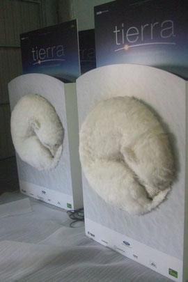 Oso Polar, carteles 3D para prsentación de Pelicula Tierra, Festival de San Sebastián