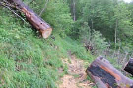N°22/ Une bille (diamètre 50 cm) tronçonnée pour ouvrir le chemin d'Ilhurté du Bois de Chimits : la partie amont menace de glisser.