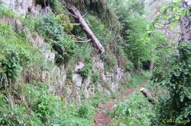N°22/ Une bille (diamètre 25 cm) tronçonnée pour ouvrir le chemin d'Ilhurté du Bois de Chimits : la partie amont menace de glisser.
