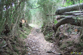 N°3/ Le Chemin de Bosdapous montant depuis le Cloître de Sarrance est ouvert : il reste encore du travail pour dégager totalement les chablis.