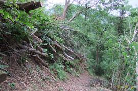 N°20/ Rondins suspendus au-dessus des têtes dans le ravin d'Ourtaig (itinéraire des Jaupins) : passage ouvert mais pas sécurisé. Il aurait fallu billonner la totalité des grumes en amont. C'était bien plus de travail ! Du rendement, mais pas de qualité.
