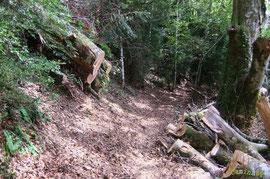 N°28 / Vus de l'autre côté, les deux mêmes chablis instables dont les souches culminent l'amont du chemin 10 m plus haut : impressionnant !