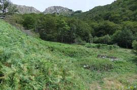 N°41/ le Tour de la Cabane du bas de Sabas enfouie sous les herbes folles : un débroussaillage était pourtant attendu...