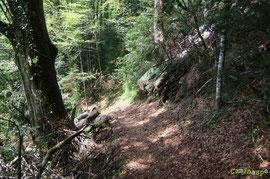 N°28 / Dans le fond du Bois d'Anitch, les deux gros chablis entre les ruisseaux de Louyat et de Copen menacent de glisser sur le dos des randonneurs : il en reste beaucoup à tronçonner par en haut, à terminer par des professionnels, sécurité oblige !