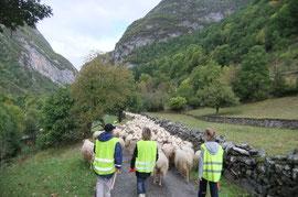 Pastorale sur les pas des Pèlerins de Compostelle