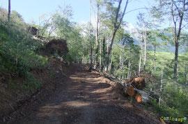 N°25/ La piste forestière de Bergout dégagée de ses chablis et renivellée avec une pelle mécanique : des gros moyens mis en œuvre par l'ONF. Toutefois, il reste une forêt décharnée.