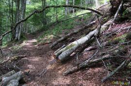 N°28/ Service minimum pour passer sur le Chemin de Louyat, côté Lées-Athas, les bâtons de randonnée donnent l'échelle !