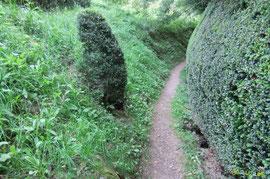 N°21/ Le Chemin d'Escraps en haut du Chemin d'Igaüt n°21 à peine effleuré pour la deuxième coupe ; par contre, les buis taillés sont l'oeuvre du Cantonnier aux doigts d'or d'Aydius...