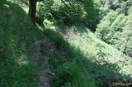 N°25/ Un trou à réparer sur le chemin des Ichantes depuis 2009 entre la ruine de la Grange Lées-Lapou et le ruisseau de Sarité.